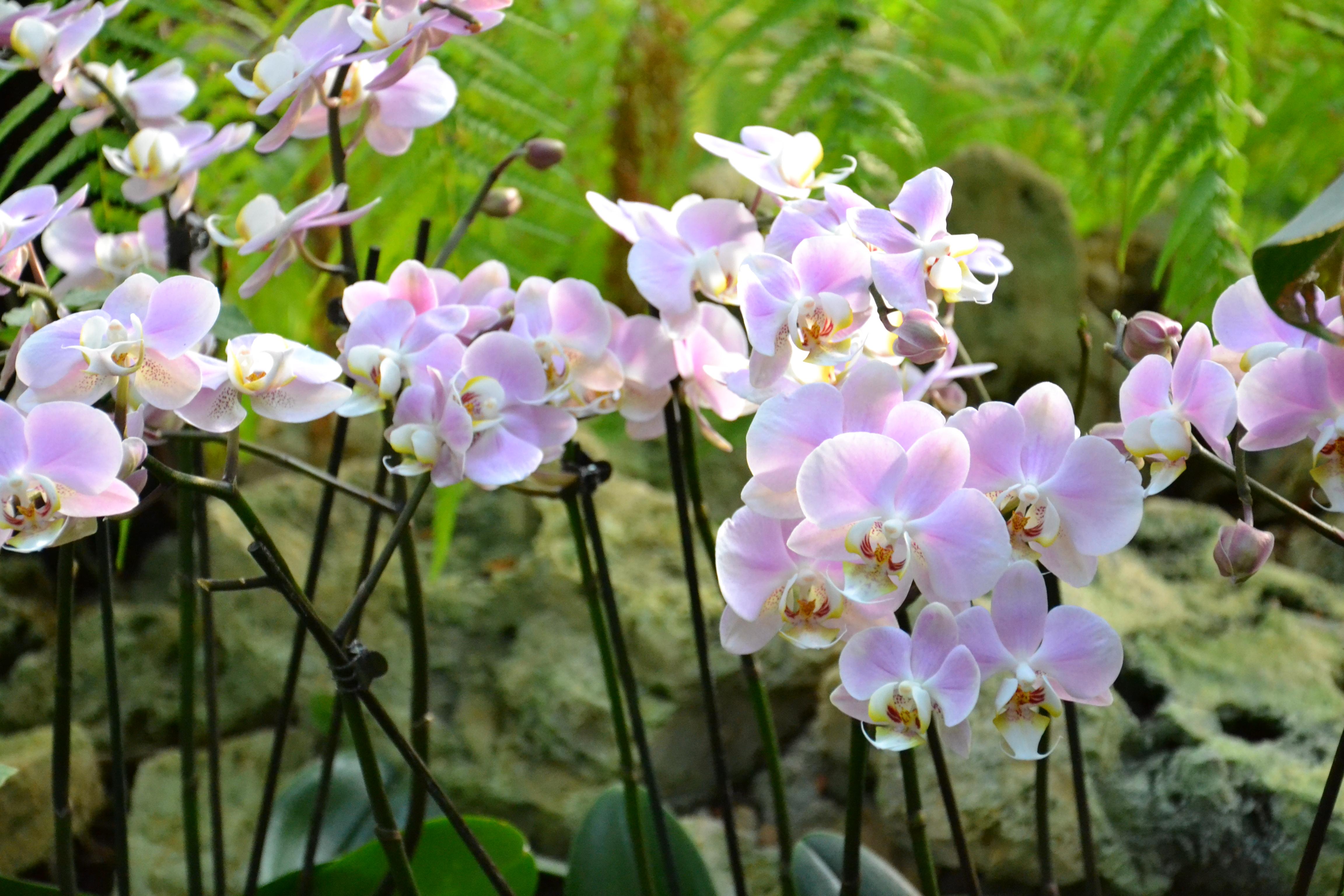 Mille et une orchid es au jardin des plantes 1 mag by for Jardin des plantes orchidees 2016