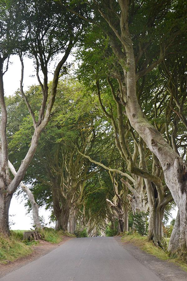The Dark Hedges-GOT-Game of Thrones-Ulster-Irlande-Road trip-Voyage