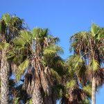 Road trip dans l'Ouest américain : Las Vegas et Los Angeles